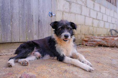 Beautiful black and white stray dog, Santa Cruz Cabralia, Bahia, Brazil, South America