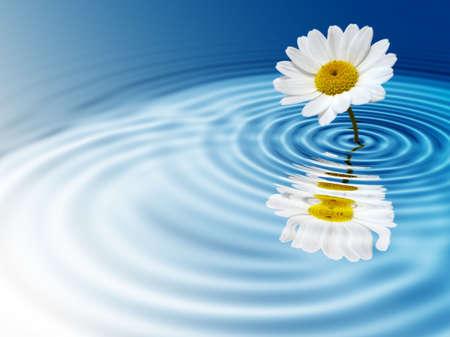 White daisy on blue rippled background photo