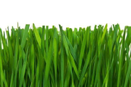 Fresh green grass cut on white background close up