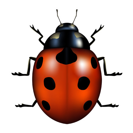 vector illustration of a ladybug isolated on white Stock Vector - 4017798