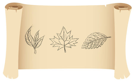 a sketch of three leaves on a manuscript Stock Vector - 4119455