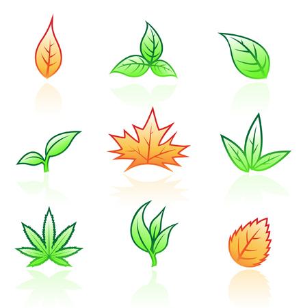 hojas parra: Hoja iconos aisladas sobre fondo blanco