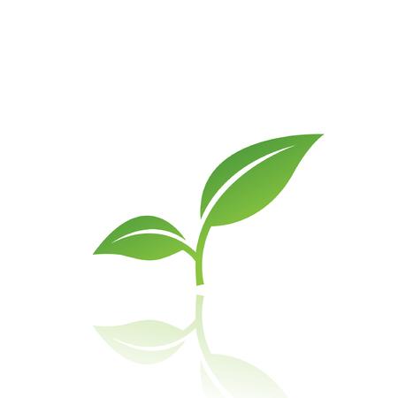feuille arbre: Feuilles vert isol�es sur blanc