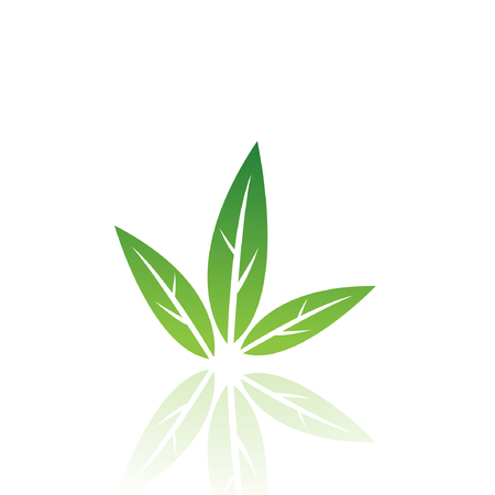 Green leaf isolated on white Stock Vector - 7276434
