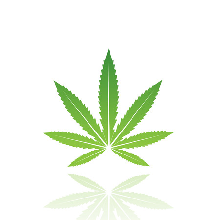 marijuana: Green leaf isolated on white