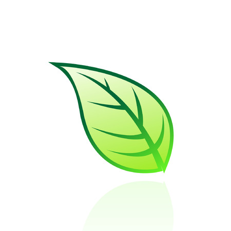 leaf logo: Glossy green leaf isolated on white