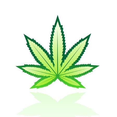 marihuana: Hoja verde brillante, aislado en blanco  Vectores