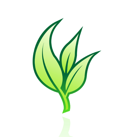 Glossy green leaf isolated on white Stock Vector - 7276482