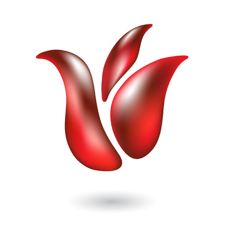 red tulip: Glossy red tulip isolated on white