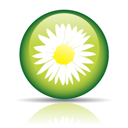 Glossy camomile in green circle isolated on white Stock Photo