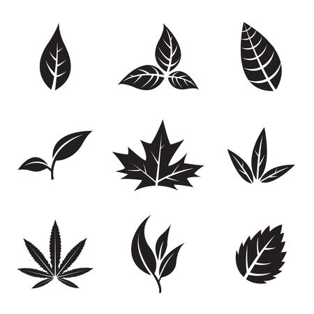 art flower: Vector Illustration of Black Leaves isolated on white