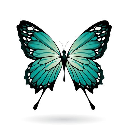 Vector illustration d'un papillon coloré isolé sur un fond blanc Vecteurs