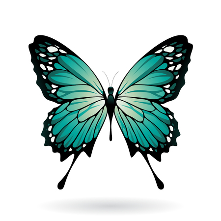 insect flies: Vector Illustration of a Colorful Butterfly isolated on a white background Illustration