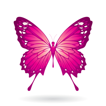 Vector Illustration of a Colorful Butterfly isolated on a white background Illustration