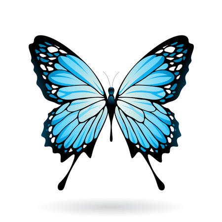 Vector Illustration of a Colorful Butterfly isolated on a white background Иллюстрация