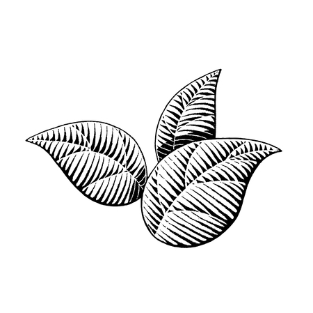 black hands: Vector Illustration of a Scratchboard Style Ink Drawing of Leaves Illustration