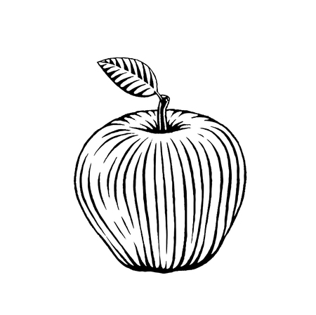 leaf: Vector Illustration of a Scratchboard Style Ink Drawing of an Apple