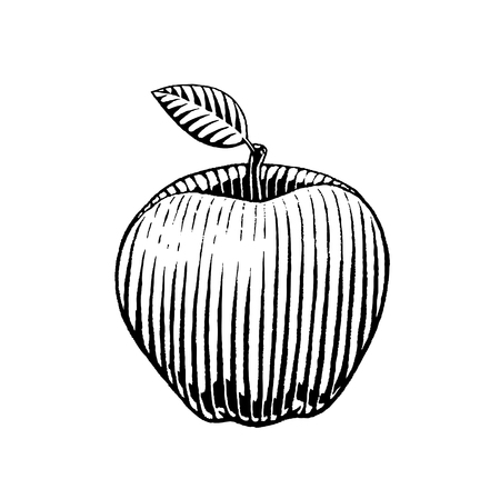scratchboard: Vector Illustration of a Scratchboard Style Ink Drawing of an Apple