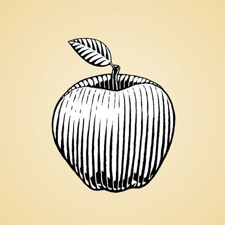 scratchboard: Vector Illustration of a Scratchboard Style Ink Drawing of an Apple with White Fill