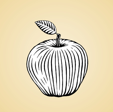Vector Illustration of a Scratchboard Style Ink Drawing of an Apple with White Fill