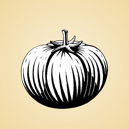 scratchboard: Vector Illustration of a Scratchboard Style Ink Drawing of a Tomato with White Fill