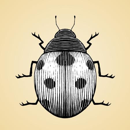 escarabajo: Ilustración vectorial de un estilo Scratchboard Dibujo de tinta de una mariquita con relleno blanco