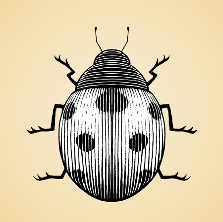 Vector Illustration of a Scratchboard Style Ink Drawing of a Ladybug with White Fill Illustration