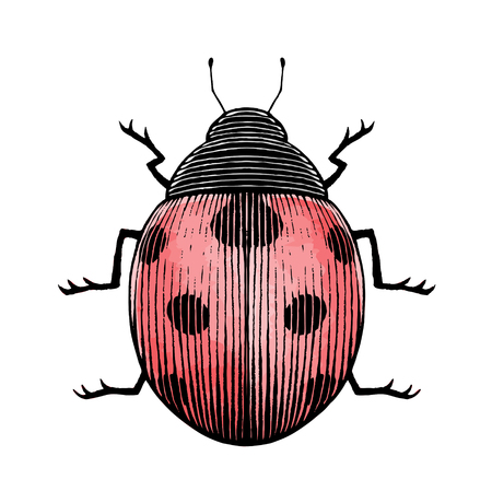 Vector Illustration of a Scratchboard Style Ink and Watercolor Drawing of a Ladybug Illustration