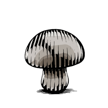 isolated: Vector Illustration of a Scratchboard Style Ink and Watercolor Drawing of a Mushroom Illustration