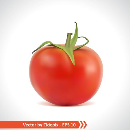 Gradient Mesh Vector Illustration of a Photo Realistic Red Tomato