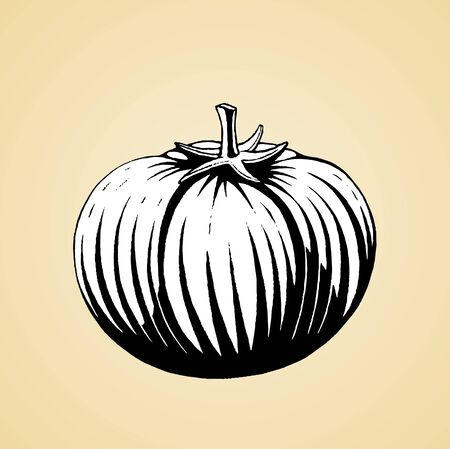 Illustration of a Scratchboard Style Ink Drawing of a Tomato with White Fill