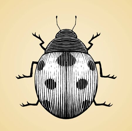 Illustration of a Scratchboard Style Ink Drawing of a Ladybug with White Fill