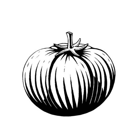 Illustration of a Scratchboard Style Ink Drawing of a Tomato