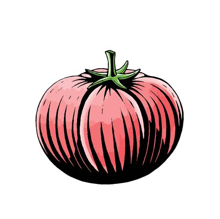 Illustration of a Scratchboard Style Ink and Watercolor Drawing of a Tomato