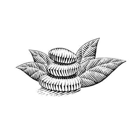Illustration of a Scratchboard Style Ink Drawing of Spa Stones Reklamní fotografie