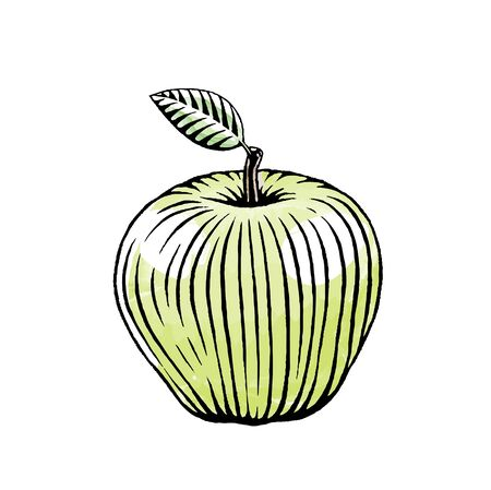 Illustration of a Scratchboard Style Ink and Watercolor Drawing of a Green Apple