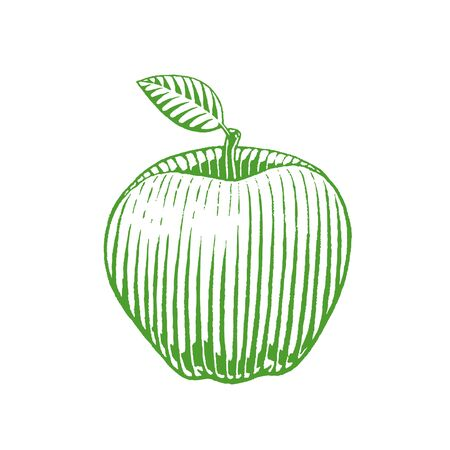 Illustration of Green Ink Sketch of Apple isolated on a White Background