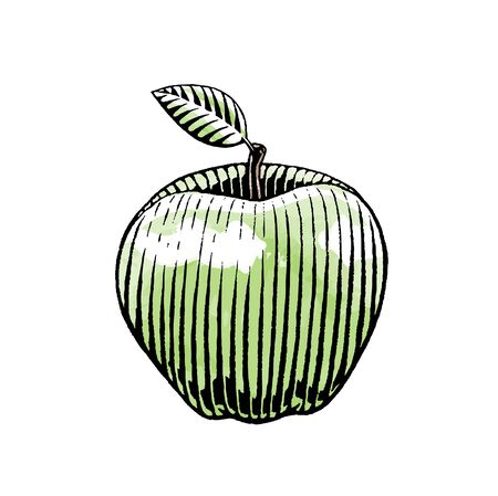 Illustration of a Scratchboard Style Ink and Watercolor  Drawing of an Apple