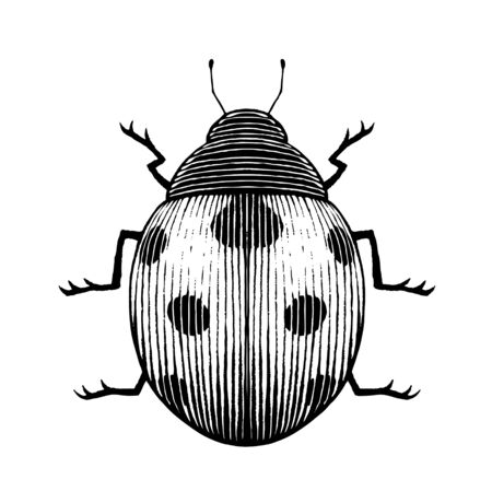 Illustration of a Scratchboard Style Ink Drawing of a Ladybug