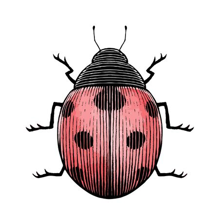 Illustration of a Scratchboard Style Ink and Watercolor Drawing of a Ladybug