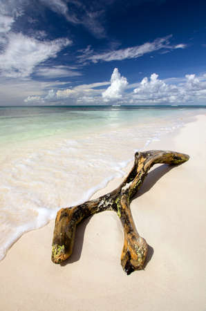 dominican republic: Saona Tropical Beach Dominican Republic Caribbean