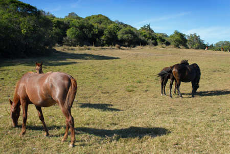 Group of horses grazing in a meadow photo