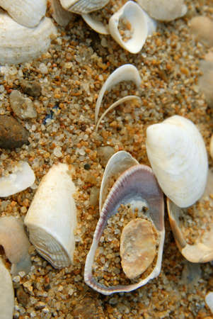 Close-up of sea shells on the beach. Golden sand background Stock Photo - 5683993