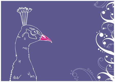 Peacock outline illustration on blue background. Vector