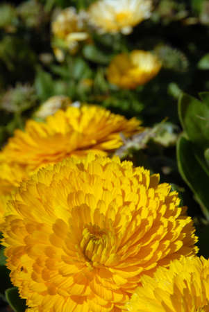 Yellow flower. Close-up shot Stock Photo - 5757716