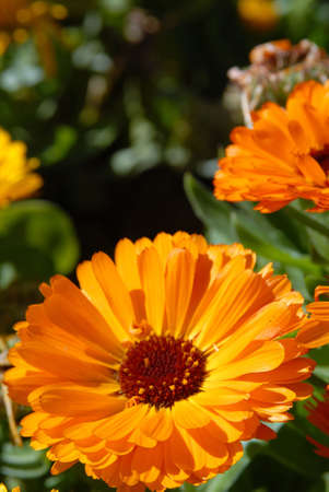 Orange flowers. Close-up shot Stock Photo - 5757707