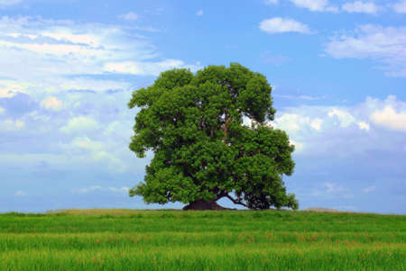 recycle tree: Tree and green grass. Cloudy blue sky background. Stock Photo