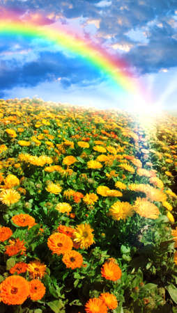 Multicolored flower meadow and rainbow landscape. Stock Photo