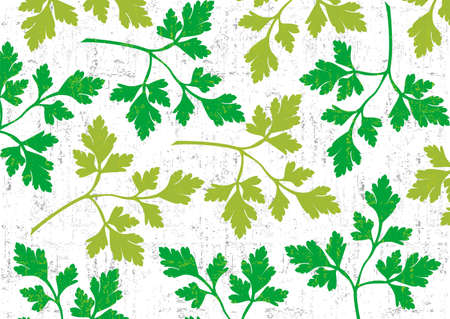 herbes: Parsley wallpaper vertical on white background.