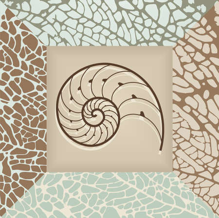 Nautilus shell illustration on brown and beige background